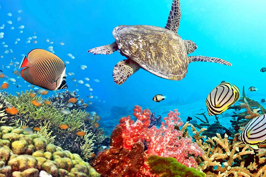 لاک پشت های دریایی در جزیره کیش